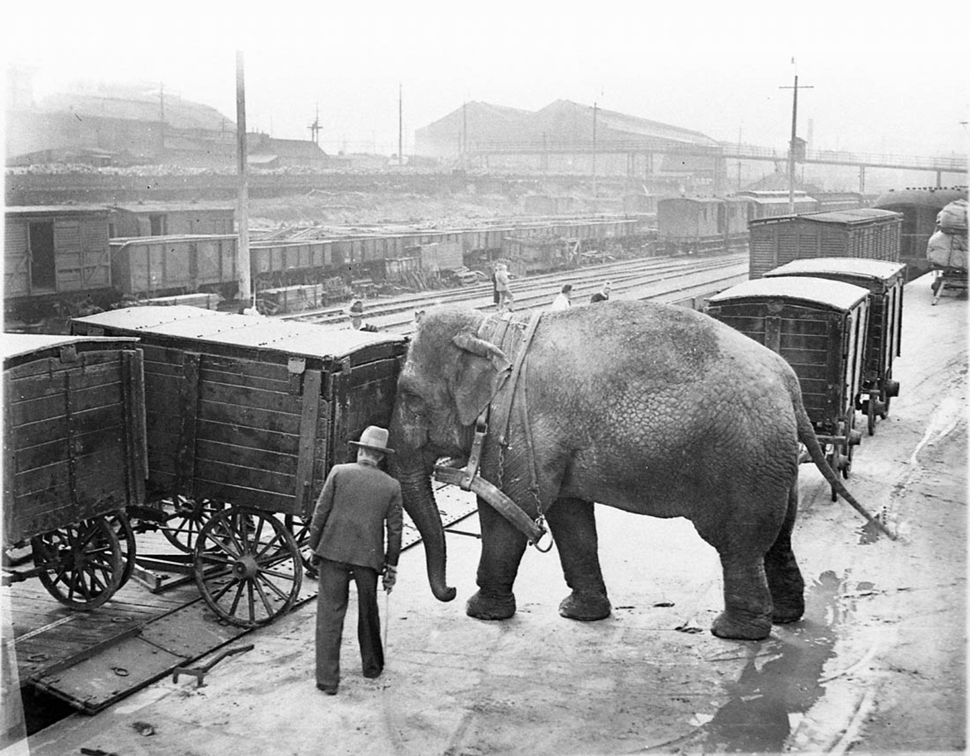 Alice the elephant loading the Wirth's Circus train